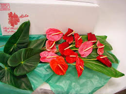 shipping wholesale flowers