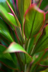 Fresh Wholesale Tropical Foliage Miami Two Tone Ti