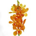 Wholesale fresh orchids Yellow Mokara